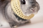 bunny in cowl