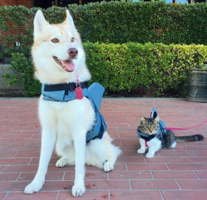 dog-and-kitty-friends