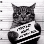funny-cat-pictures-guilty-cat