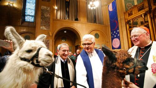 llama blessing