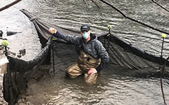 netting for glass eels